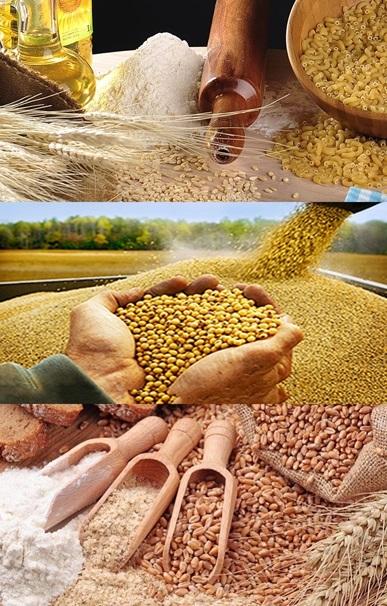 Gıda Hammaddesi Sektörüde ERP Uygulamaları